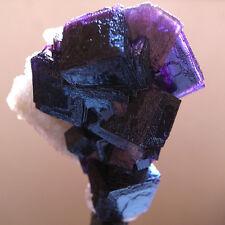 MUSEUM ! Purple FLUORITE w/ Purple PHANTOMS CUBIC FLUORITE GROUP SPECIMEN