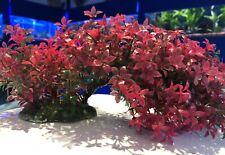 Bendy Colourful Aquarium Plant Decorative Fish Tank Decor Pink Red Yellow Green