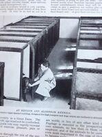 K1-8 Ephemera 1930s Picture Hendon And Aldenham Kennels Pupil At Work