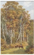 Hampshire; New Forest, Silver Birches, Artist Signed A R Quinton PPC, Unposted