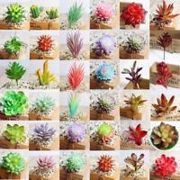 Artificial Succulents Plant Garden Miniature Fake Cactus DIY Home Office Decor