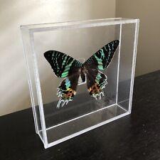 SIGNED Madagascar Sunset Moth Taxidermy Specimen Shadow Box Butterfly Like Art
