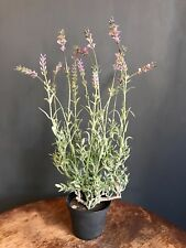 Realistic Potted Artificial Lavender, Faux Silk Flowers, Shabby Chic