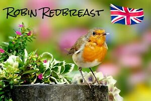 ROBIN REDBREAST (BRITISH ISLES) - NOVELTY SOUVENIR FRIDGE MAGNET - BIRDS / GIFTS