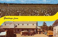 COTTON FIELD & COTTON GIN FAMILIAR IN SOUTH GREETINGS POSTCARD c1960s