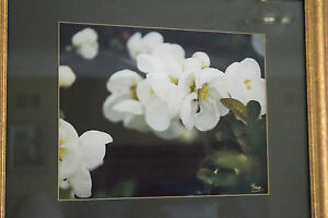 White Orchid FRAMED FLORAL Photograph dark green matting gold frame glass signed