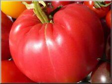 graines de tomate jérusalum vendu en sachet de 30 graines