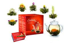 Erblühtee im Geschenkset Creano 6x Teeblumen Mix weisser Tee mit Glaskanne
