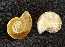 Ammonite géode cabochon 20x17x3mm lot de 2