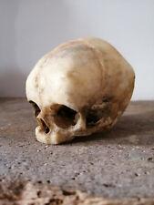 Crâne de foetus humain réaliste, human skull, curiosité, curiosity, replica