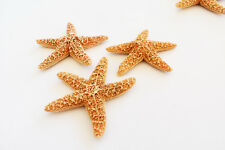 Set of 3 Small Sugar Starfish 1-2