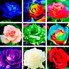 200 Pcs Seeds Rare Rainbow Rose Perennial Bonsai Plants Flowers Home Garden 2020