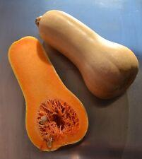 "15 Semillas de Calabaza Botella, Aquita (Cucurbita moschata 'Butternut""), seeds"