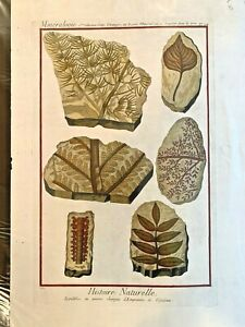 1751 DIDEROT Antique Folio Hand Colored Engraving Fossils Minerals #13
