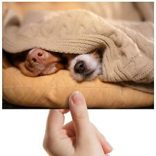"Sleeping Dogs Blanket Cute Small Photograph 6"" x 4"" Art Print Photo Gift #14073"