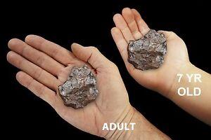 "Pure Red Hematite 2"" 4-7 Oz Rock Mineral Specimen Rough Natural Stone Iron Oxide"