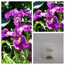 Iris sibirica x  'Red Flame' - Siberian Iris - 15 Fresh 2015 Seed - Perennial