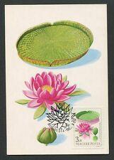 UNGARN MK 1965 FLORA SEEROSE VICTORIA AMAZONICA CARTE MAXIMUM CARD MC CM 60607