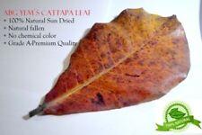 Size:10 x 20 cm Indian Cattapa Leaves Ketapang for Betta Shrimp:, Grade A