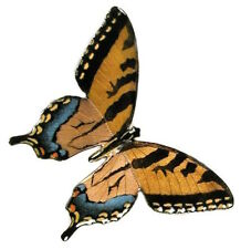 Bovano - Wall Sculpture - Tiger Swallowtail Butterfly with Open Wings