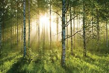 Wall Mural photo wallpaper Sunny Green Forest Scene approx. 315 x 232cm Trees