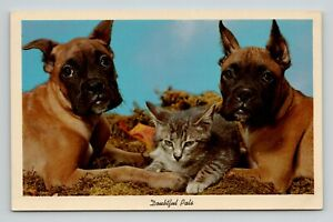 Postcard Vintage Doubtful Pals Puppies and Kitten Cute Friends Together