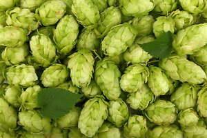 100g Homebrew hops for brewing - Citra Cascade Amarillo Simcoe Mosaic Galaxy