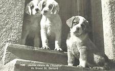 Rppc-#7540,Jeunes chiens de l'Hospice du Grand St. Bernard,Switzerland,3 puppies