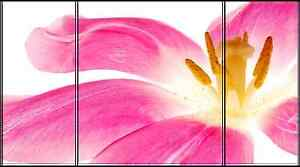 Pink Flower Petals Photo Art on Canvas Framed and Ready to Hang Wall Decor