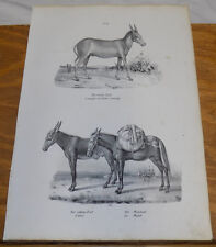 1834 Antique Print///MILD ASS, TAME DONKEY, MULE///3 Illustrations