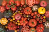 100 graines Tomate 21 variété rustique rare colorée cerise et grosse ancienne