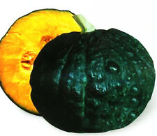 8 Pumpkin Seeds Rare Japan Black Pumpkin Seed Cucurbita Organic Vegetable