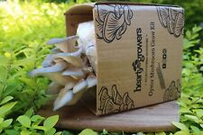 More details for grey oyster mushroom grow kit - hearty growers