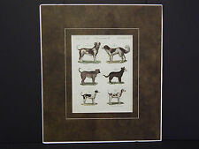 Dogs, c.1740 Copperplate Engraving, German #02