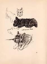 Authentique Original Lucy Dawson Chien Imprimé 1937 Vintage Art