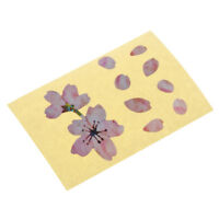 Guitar Bass Inlay Decals Fretboard Markers Sticker - Cherry Blossom