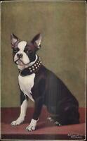 Beautiful Vintage Boston Terrier Dog 1906 Sheahan Postcard