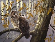 Matted Owls in Autumn Foil Art Print~8x10 Affordable Animal Art