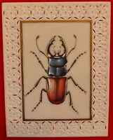 Hand Painted Insect Miniature Painting India Art Nature Synthetic Ivory