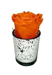 Preserved rose -ORANGE-In silver mercury glass |long-lasting|eternal|real|luxury