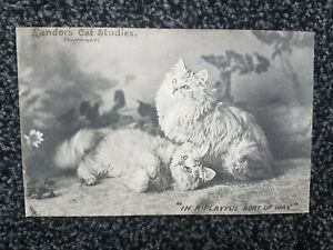 Single Cat with Sign Postcards