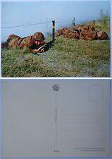 """Cartolina """"PARA' IN ADDESTRAMENTO - FOLGORE"""" - 2° TIPO Anni '70/'80 (Originale)"""