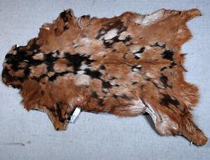 "New Goat hide Rug Hair on Area Rug Size 32""x22"" Animal Leather Goat Skin U-5646"