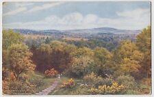 POSTCARD - A. R. Quinton (ARQ) *1276 - The Happy Valley, Tunbridge Wells, Kent