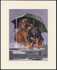DACHSHUND TWO DOGS UNDER UMBERELLA LOVELY DOG PRINT MOUNTED READY TO FRAME