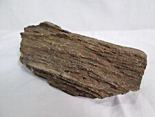 Arizona Petrified Wood Chunk, Striated Brown Tones