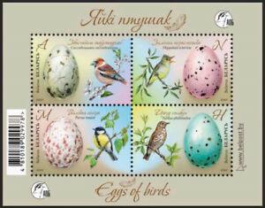 Belarus 2020 Eggs of birds Hawfinch Icterine warbler Great tit Song thrush