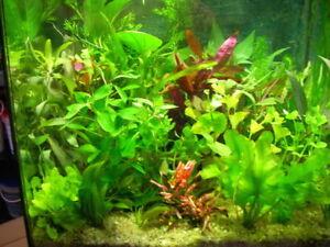 lot de 30  brins  de plantes de culture pour aquarium