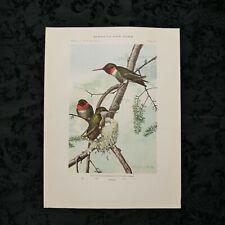 Antique 1915 Louis Agassiz Fuertes Print Plate# 66 Ruby-Throated Hummingbird