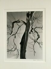 Patrick Jablonski - 8x10 - Cottonwood Tree - 1998 - Signed - Pristine Condition